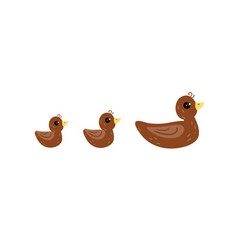 Brown duck and her ducklings cartoon vector
