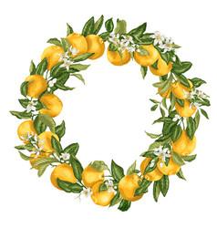 citrus orange tree ornament wreath with fruits vector image