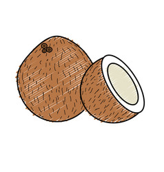 Coconot fruit with one slice vector