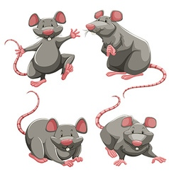 Gray rat in different poses vector