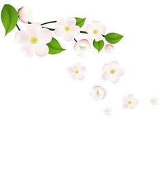 Pink Apple Tree Flowers Border vector image