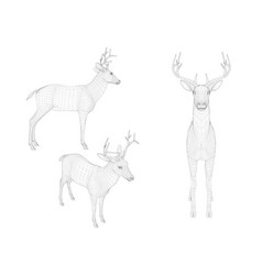 set with wireframe deer of black lines on a white vector image