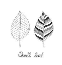 doodles leaves vector image