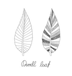 doodles leaves vector image