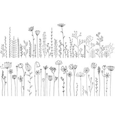 drawing herbs and flowers vector image