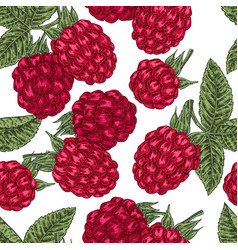 Hand drawn sketchy berries ripe raspberry branch vector