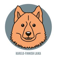 Portrait of karelo-finnish laika vector