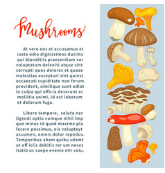 Ripe forest mushrooms of all edible species vector
