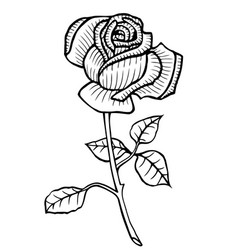 Rose hand drawn vector