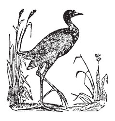 water fowl vintage vector image