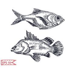 sketch - fish hand drawn vector image