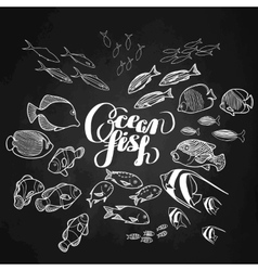 Collection of ocean fish vector image vector image