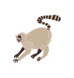 Lemur wild exotic african animal vector