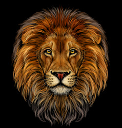 lion color realistic portrait a lions head vector image