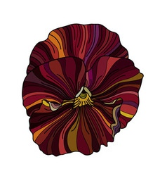 Pansy flower drawing vector image