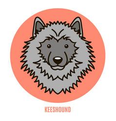 Portrait of keeshound vector