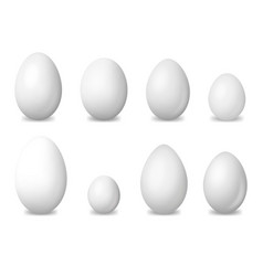 Realistic detailed 3d white blank bird eggs set vector