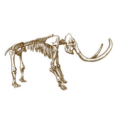 engraving of mammoth skeleton vector image
