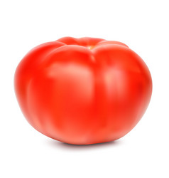 red whole tomato isolated on a white background vector image
