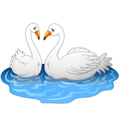 swan couples on the lake vector image