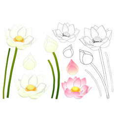 indian lotus outline vector image