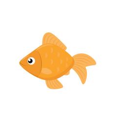 Cute goldfish icon vector