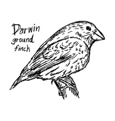 Darwin ground finch on the tree vector