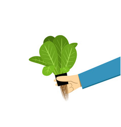 farmer show hydroponics vegetable on white vector image vector image