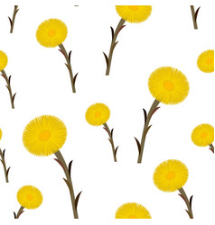 seamless pattern coltsfoot flowers vector image vector image