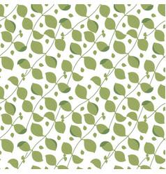 Basil pattern vector