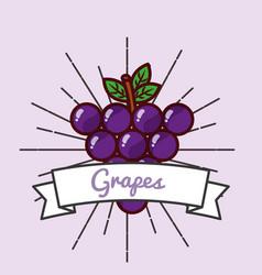 grapes fruit organic vitamins emblem vector image