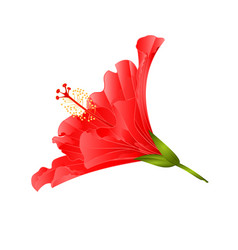 red flower tropical plant hibiscus vector image