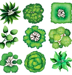 Topview of leaves vector