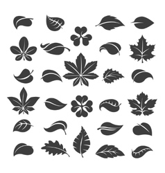 Tree leaves black silhouettes vector