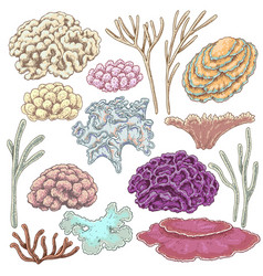 colored corals set vector image