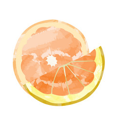 Isolated orange cuts vector