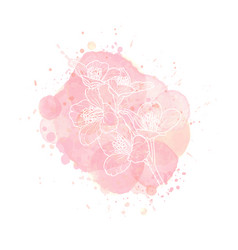 outline jasmine flower on watercolor effect vector image