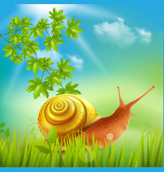 snail in grass realistic vector image