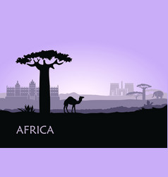 evening landscape with camels baobabs and vector image vector image