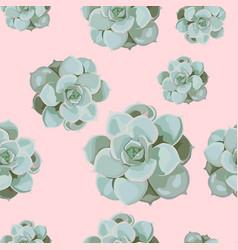 pattern arranged from echeveria succulen vector image
