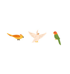 set exotic birds - yellow parrot with crest vector image