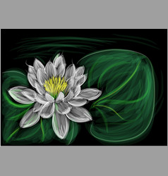 Water lily with leaf vector