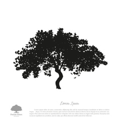 Black tree silhouette on a white background vector image