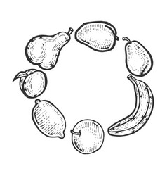 fruits sketch engraving vector image