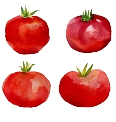 Watercolor set tomatoes vector image vector image