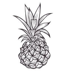 hand drawn pineapple vector image