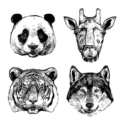 Hand Drawn Animals Portraits vector image