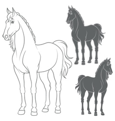 Set of with the horse vector