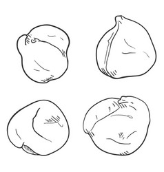 set sketch chickpea vector image