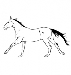 stallion galloping vector image